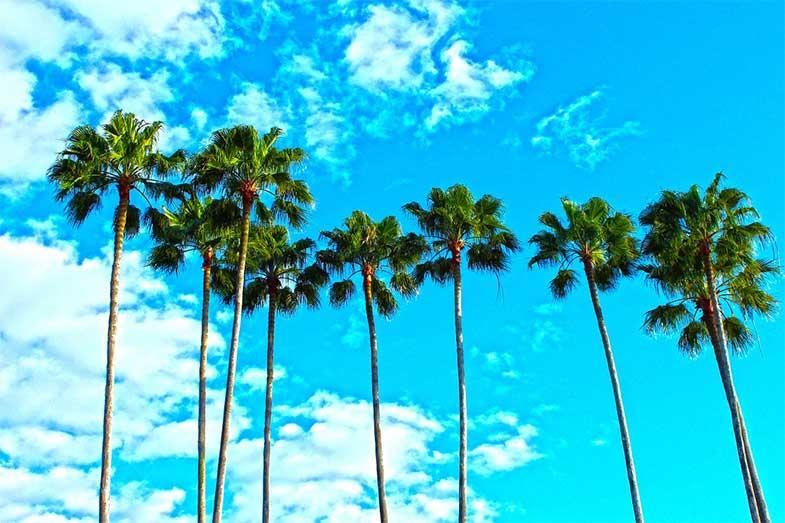 Florida Palm Trees and Sky
