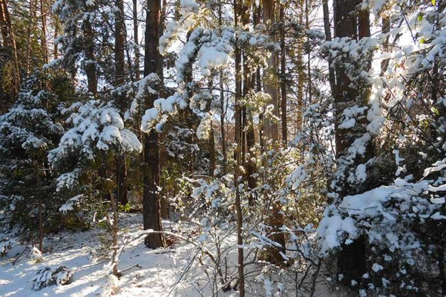 Winter in North Carolina (Everything You Need to Know)