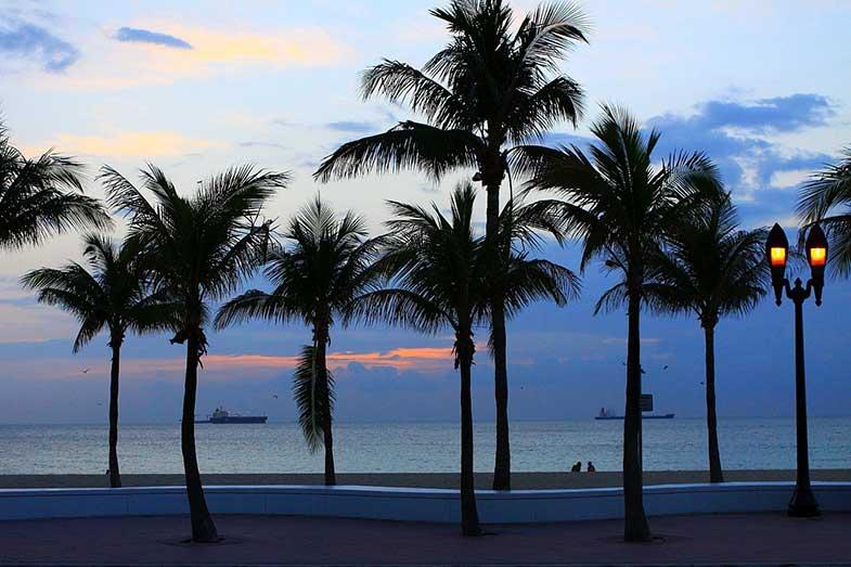 Florida Beach Palm Trees at Dawn