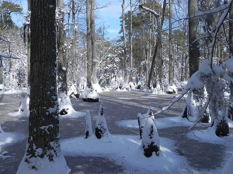 Florida Swamp Covered in Snow