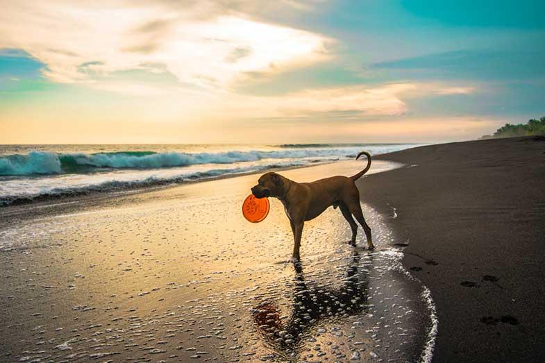 Short-Coated Brown Dog on Beach Seashore