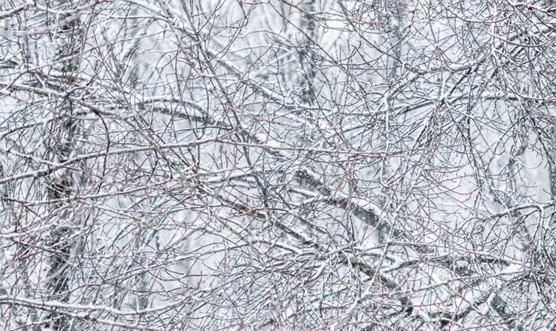 Snow Covered Tree Branches in Scenic Nature