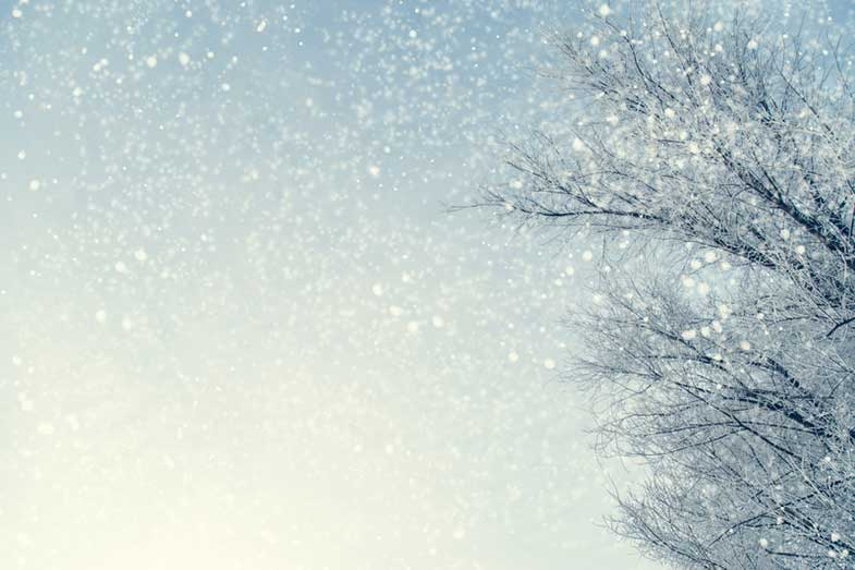 Snowy Tree Branches Against Blue Sky During Snowfall