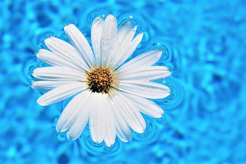 Swimming Pool Water Surface