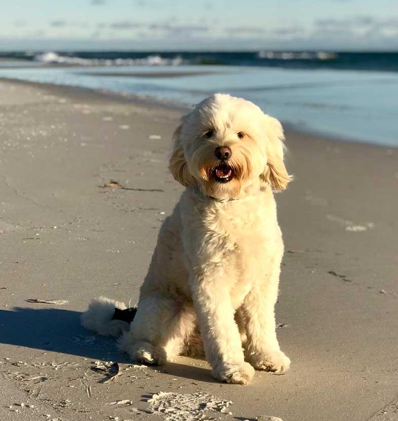 White Dog on Beach