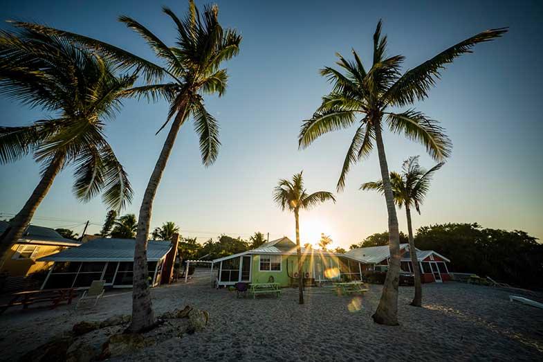 Sanibel Island Florida Beach Palm Trees