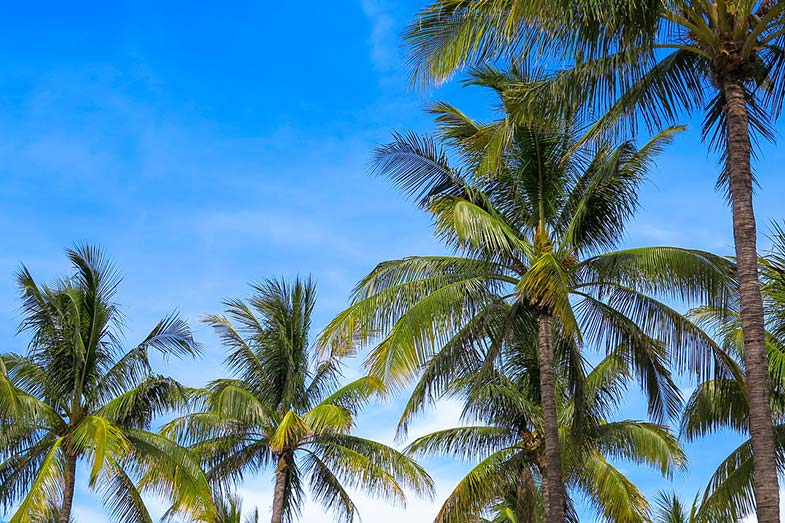 Palm Trees, Sunny Day