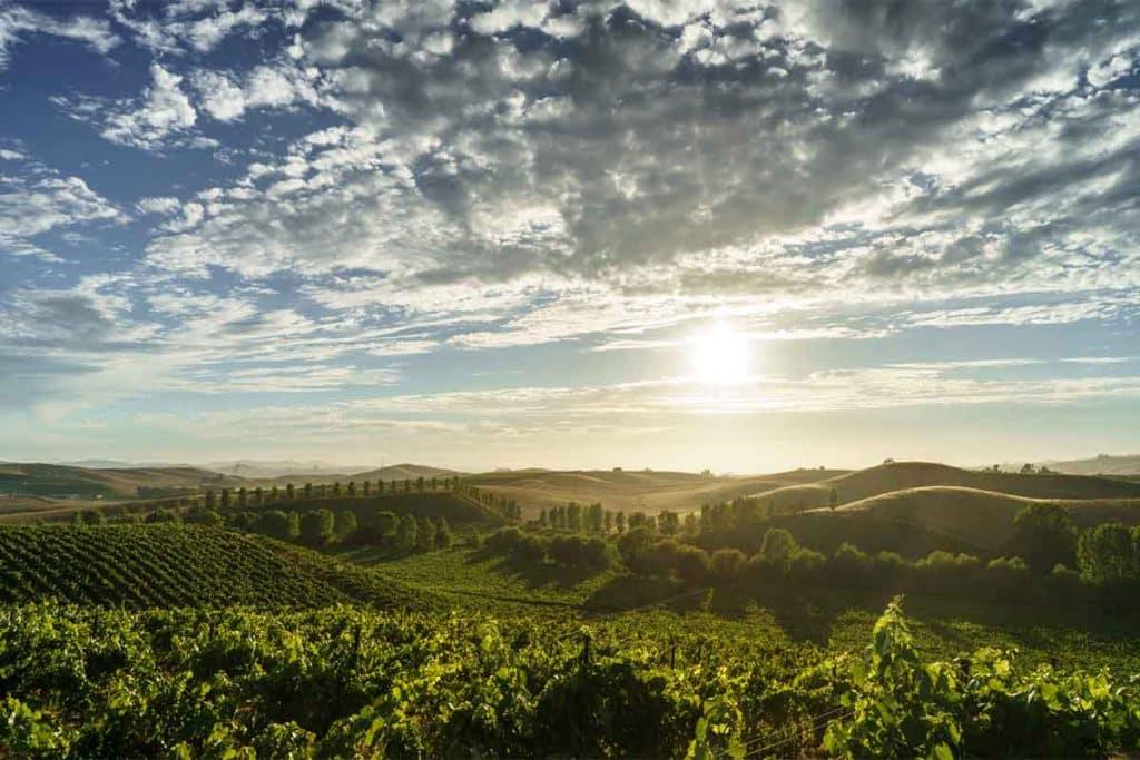 Sonoma Vineyard in California