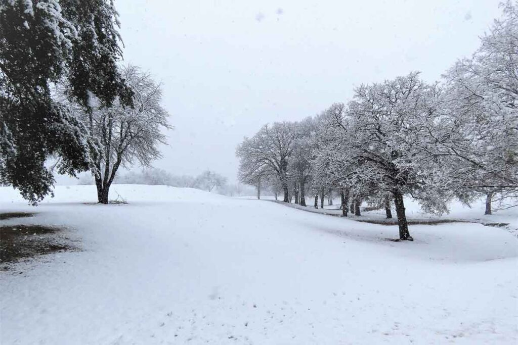 Snow in Texas Landscape with Trees